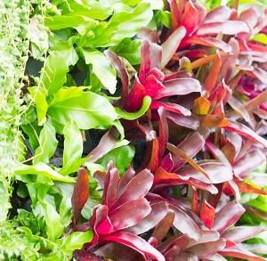 Array of bromeliad vertical garden.
